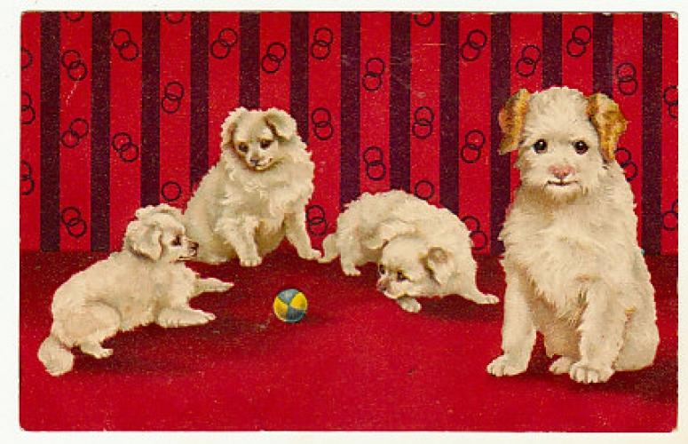 Cpa Légèrement gaufrée 4 chiens et une balle