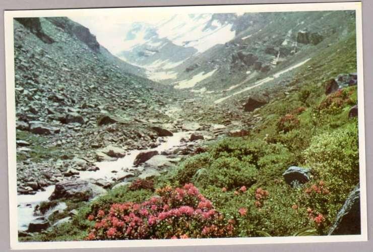 France - Les Alpes Touristiques - Rhododendrons et au fond, l' Olan (3564m Massif des Ecrins)