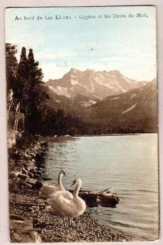 Suisse - au bord du Lac Léman - Cygnes et les Dents du Midi - circ 1917 avec timbres et cachet