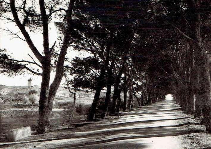FONTVIEILLE : La route bordée de pins et à gauche le moulin de Daudet