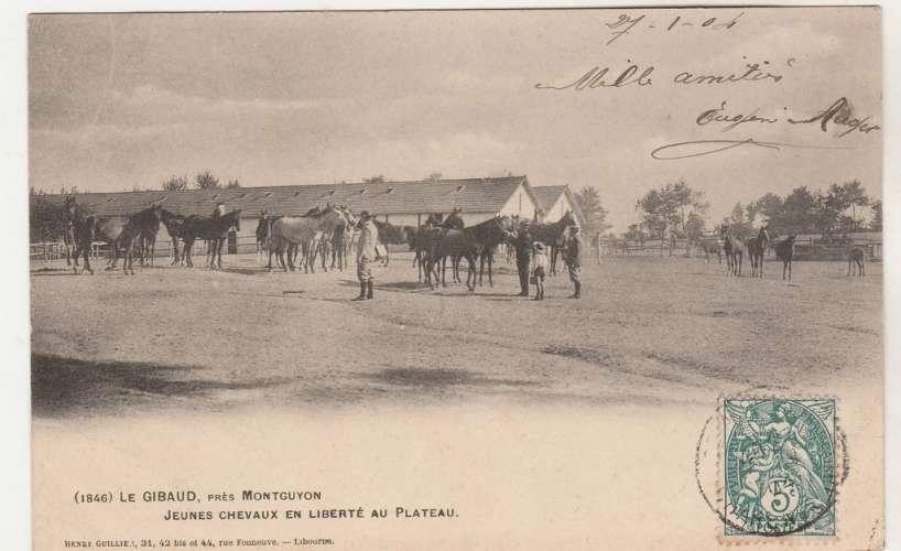 cpa 17 Le Gibaud près Montguyon jeunes chevaux en liberté au Plateau