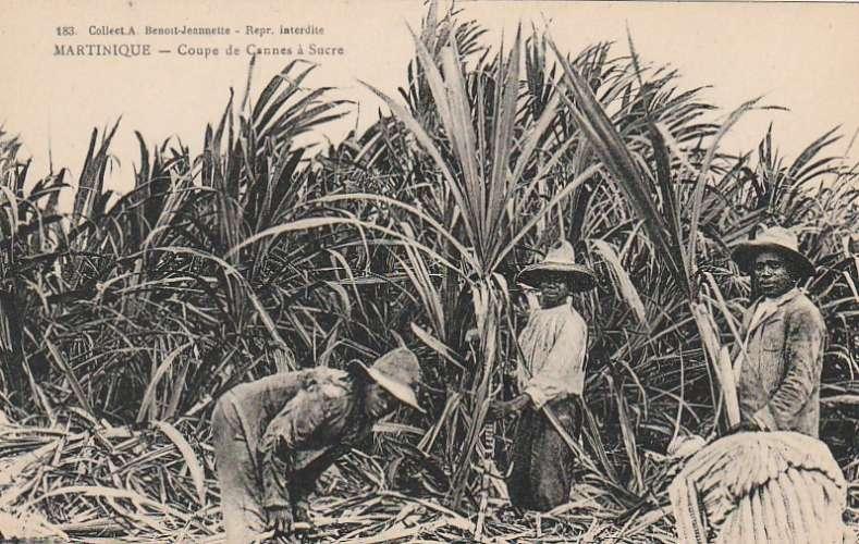 Martinique - Coupe de cannes à sucre -