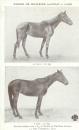 miniature  Cpa cheval  , résultat obtenu avec 1 kg de farine de Nucléine Lavocat Lyon
