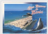 miniature cpm 22 Binic , la plage de l'avant port - dauphins ,  non voyagée