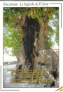 miniature Cpsm 40 Biscarrosse , la légende de l'Orme , non circulée