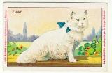 Chromo Blédine Animaux domestiques  Le Chat