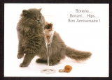 France Cpm  Bonana...Bonani...Hips...Bon Anniversaire ! chats  - verre - humour