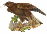 DECOUPIS gaufré animal oiseau aigle 8 x 9 cm parfait état époque 1900