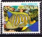 miniature Australie 20?? YT ???? Poisson Regal Angelfish
