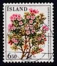 miniature TIMBRE OBLITERE D'ISLANDE - FLEURS : LOISELEURIA PROCUMBENS N° Y&T 572