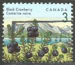 miniature Canada - 1992 - Y&T n° 1264 - Obli. - Camarine noire - Baies sauvages - Série courante