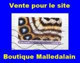 FRANCE - Oblitéré sur fragment - AA 1804 papillon Agrias claudina  - TCA 210